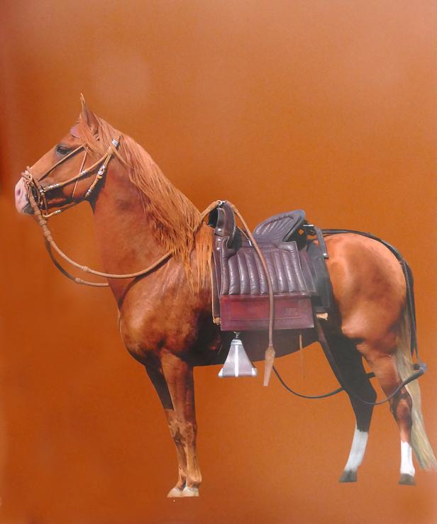 El apero peruano sus partes y uso ancpcpp for Monturas para caballos